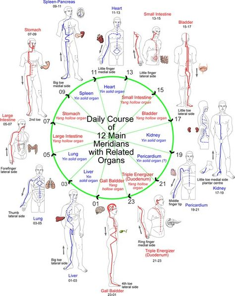 Daily course of the 12 meridians